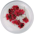 Red dried flowers