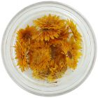 Dried flowers – orange