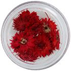 Nail art dried flowers – red
